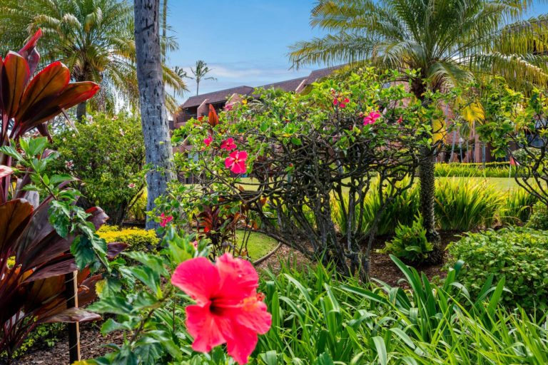 Photo of the garden with hibiscus flower